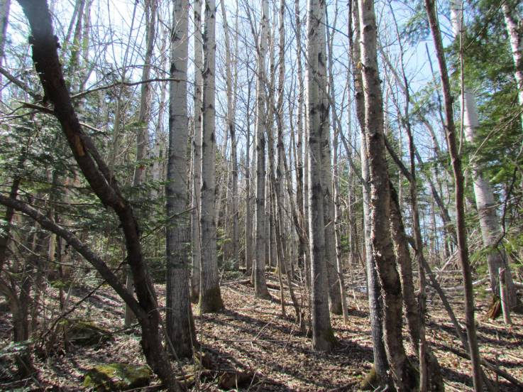 Lot and land for sale - Saint-Siméon, Charlevoix (SS037)