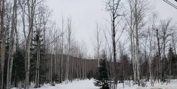 Lot and land for sale - Petite-Rivière-Saint-François, Charlevoix (PR466)