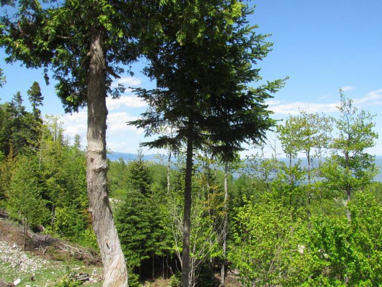 10 - Lot and land for sale, Saint-Irénée (Code - si144, Charlevoix)